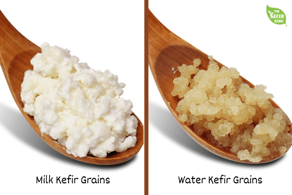 Water and Milk Kefir grains in KL